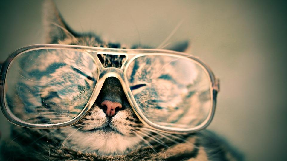 BTS OPTIQUE, chat avec des lunettes
